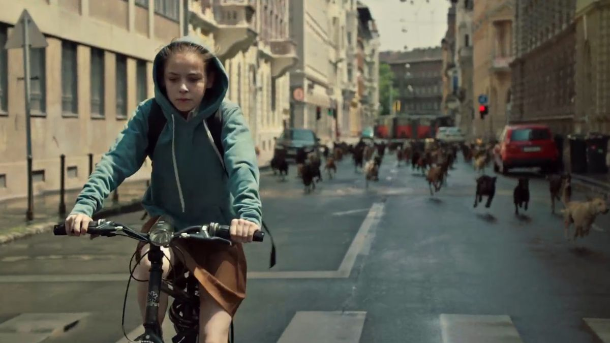 Lili riding her bike ahead a pack of dogs.